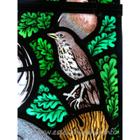 All Saints, Nazeing Church - Detail from Peter Cormack glass, showing thrush.
