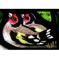 All Saints, Nazeing Church - Detail from Peter Cormack glass, showing two goldfinches.