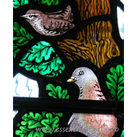 All Saints, Nazeing Church - Detail from Peter Cormack glass, showing a wren and the head and breast of a pigeon.